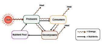 Figure 2 The flow of nutrients and energy through biological systems. Note that while nutrients are recycled over and over again, the sun must continuously supply energy.